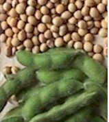 food grade soybeans.jpg (5863 bytes)